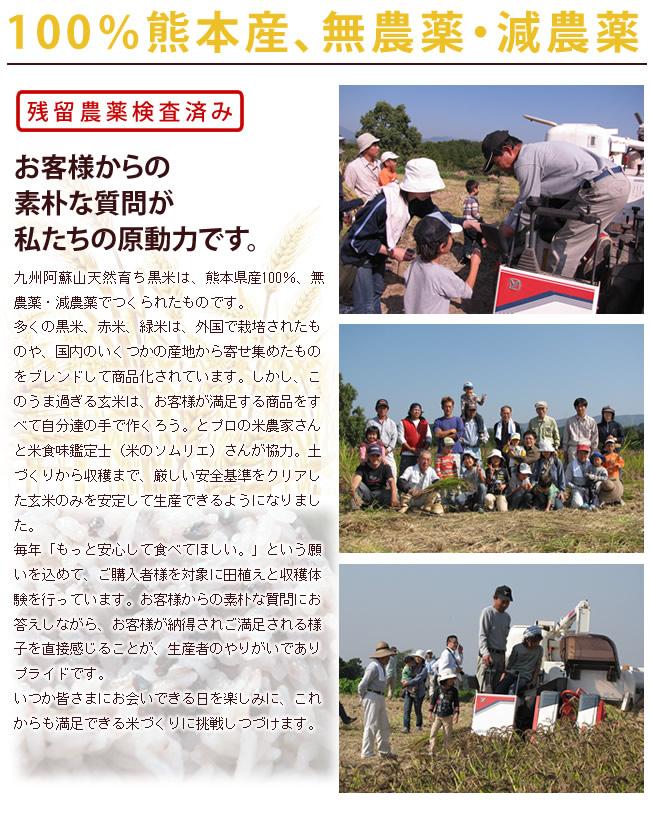 熊本産の古代米が熊本日日新聞に取り上げられました