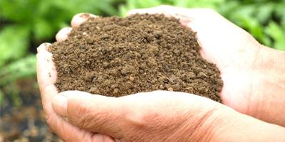 化学肥料に頼らない土づくり